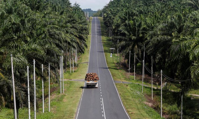 Norway's wealth fund ditches 33 palm oil firms over deforestation