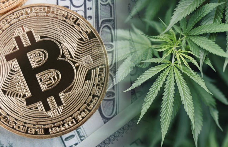 Wealth Adviser Highlights A Change In Spotlight: Is It Time For Cannabis To Shine Over Bitcoin?