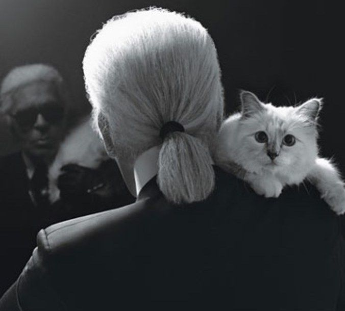 """Karl Lagerfeld's """"Heiress"""" Cat Choupette Could Become the World's Richest Cat"""
